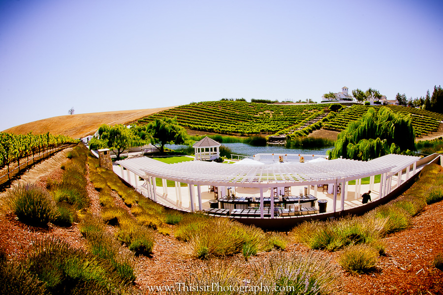 amazing Leal Vineyard Wedding Photographer