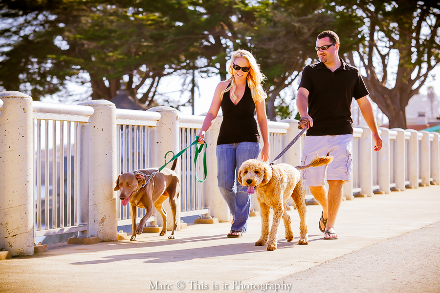 couple with dogs engagement session with affordable wedding photographer